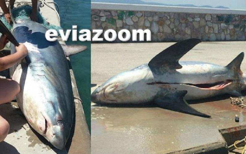 Λεύκος Καρχαρίας, Εύβοια, Ελλάδα, Αλιεύτηκε, Ψαράς, δίχτυα