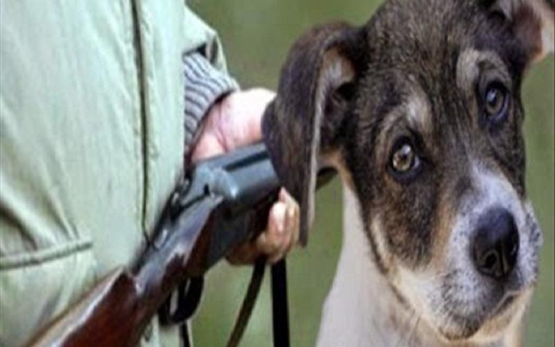 βασανισμός σκύλου, πυροβολισμός σκύλου, πυροβόλησε σκύλο στο αιτωλικό