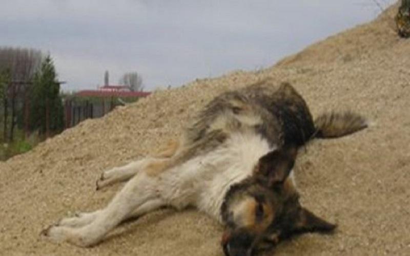 κακοποίηση σκύλου, πυροβόλησε σκύλο, πυροβόλησε σκυλιά, κακοποίηση ζώων