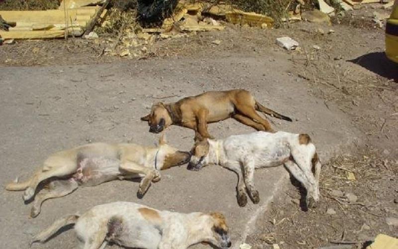 Δηλητηριάσεις σκύλων, Μεσολόγγι