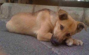 Αχαϊα: Χτύπησε το σκύλο 68χρονου μέχρι θανάτου! – Απανωτά περιστατικά…
