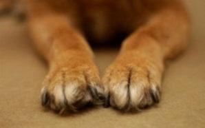 Ζάκυνθος: Άγνωστοι παραβίασαν ιδιοκτησία και σκότωσαν δυο σκυλιά