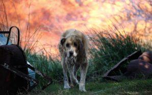 Η συγκλονιστική φωτογραφία ενός σκύλου με εγκαύματα στο Μικροχώρι Αττικής,…