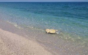Νεκρές θαλάσσιες χελώνες σε παραλίες της Λευκάδας