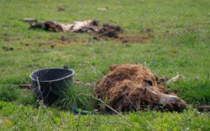 Σοκ και δέος επεκράτησε στην έφοδο της αστυνομίας στην επιχείρηση Ιπποκάμηλος στην Πάτρα, όπου ζουν υπό καθεστώς αιχμαλωσίας άγρια και ήμερα ζώα