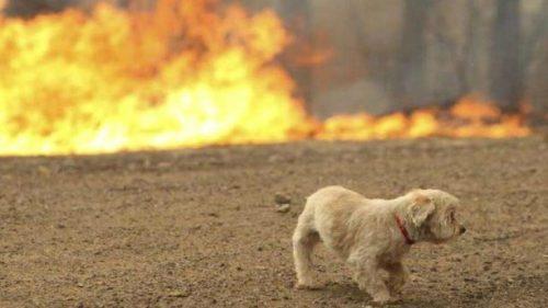 35.000 στρέμματα καμένης γης και πολλά τραυματισμένα ζώα.