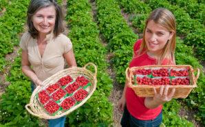 Κατά το πρόσφατο ταξίδι του πρωθυπουργού στην Κίνα επιλύθηκε το πρόβλημα για τις εξαγωγές ελληνικών φρούτων προς τη χώρα αυτή
