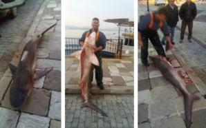 Γαλέος 60 κιλών ψαρεύτηκε στη ΒΟΝΙΤΣΑ