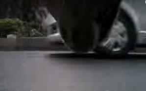 Κρυφή κάμερα σε αδέσποτο σκύλο