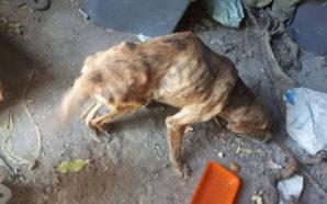 """""""Κωσταλέξι"""" ζώων στην Πάτρα – Βασάνιζε τρία σκυλιά στο υπόγειο…"""