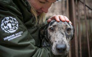 Συγκλονιστικές εικόνες από την απελευθέρωση 170 σκύλων λίγο πριν σφαγιαστούν…