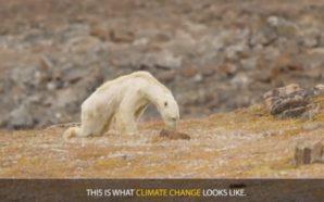 Ο αργός θάνατο μιας πολικής αρκούδας εξαιτίας της κλιματικής αλλαγής