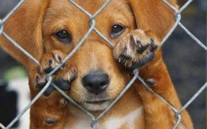 Πάτρα: Κακοποίηση σκύλου στα Ζαρουχλέικα(ακουστικό υλικό)