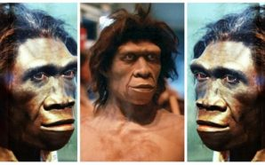 Νέα θεωρία – Ο Homo erectus δεν ήταν ένας πίθηκος,…
