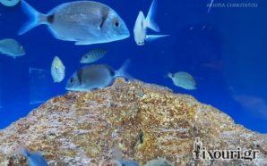 Τα μυστικά του Ιόνιου Ενυδρείου (Ionian Aquarium)