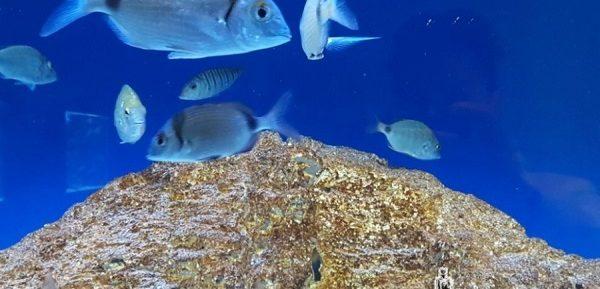 Ionian Aquarium