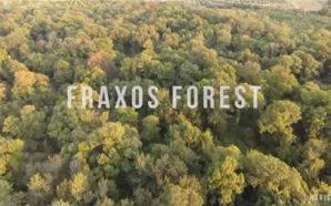 Fraxos Forest (Δάσος Φράξου) in 4K – Lesini, Greece