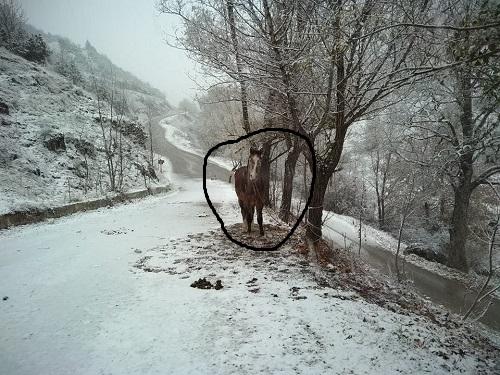 Συγκλονίζει η φωτογραφία με το δεμένο άλογο στο χιόνι